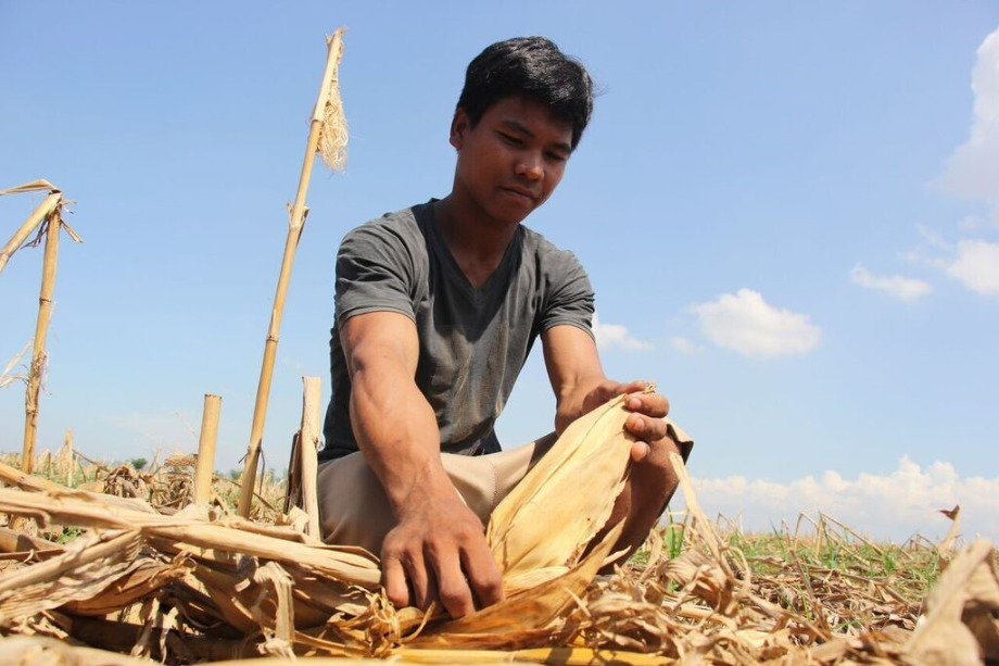 Jhonny, 26, is one of the thousands of affected farmers in Cagayan trying to make ends meet for his family after Typhoon Ompong ruined almost 50% of his income for September and October.