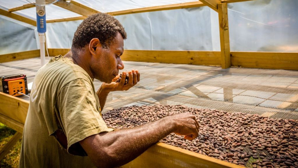 Moli weeding out flawed beans in his own 'solar house'